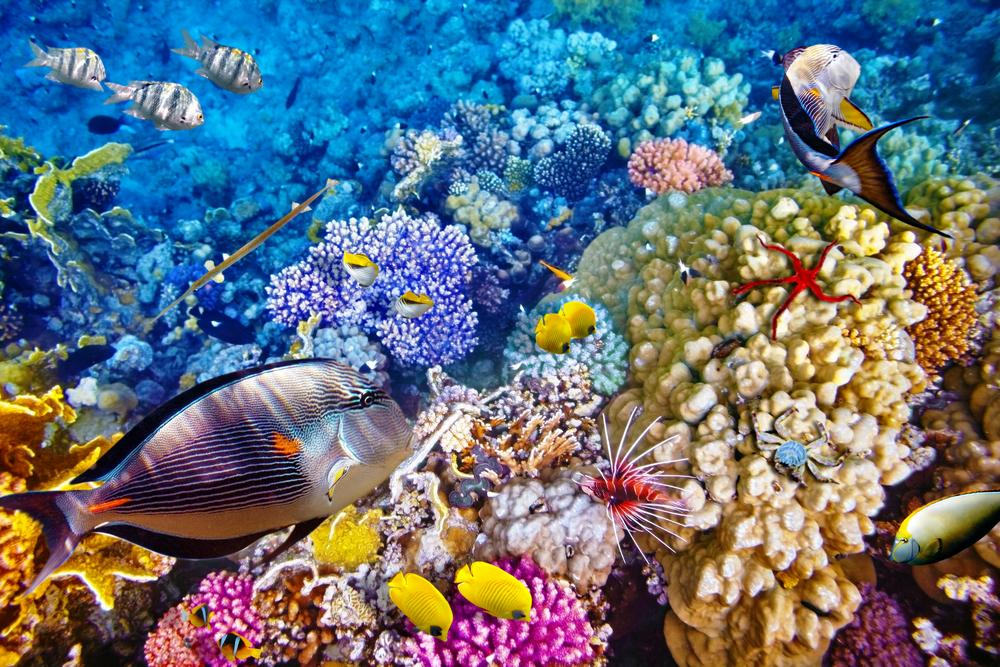 Menjangan Island in North West Bali has some of the most vibrant and healthy coral and marine ecosystems in Bali